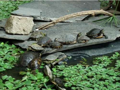turtles1